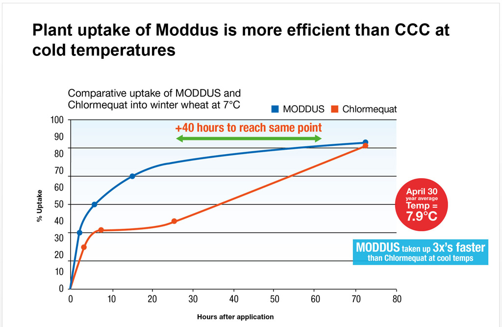 Moddus uptake in cool conditions graphic