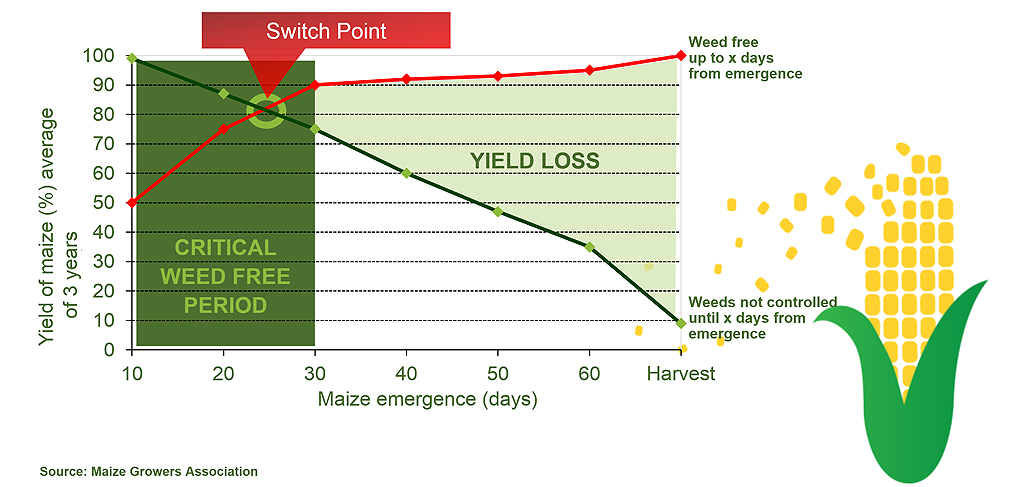 Maize switch point for unrecoverable yield loss