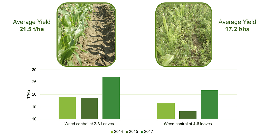 Maize trial results of weed competition impacts