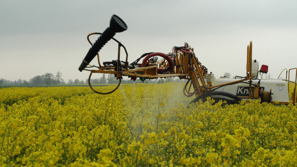 Amistar Nozzle application in flowering OSR
