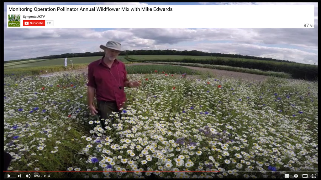 Annual wildflower margin video screen