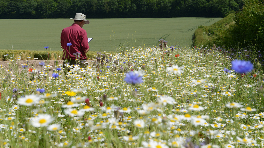 Operation Pollinator annual wildflower mix monitoring