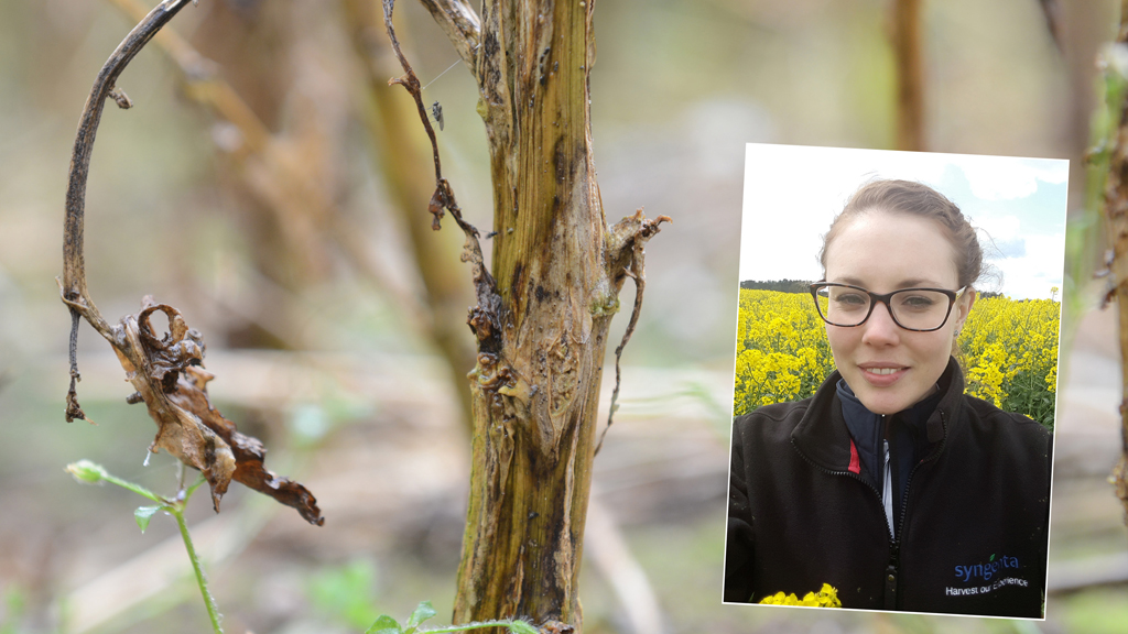 Georgina Wood with Phoma stem canker