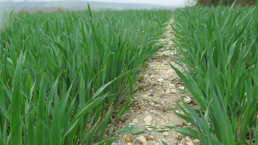 Moddus timing to manage high yielding big biomass crops
