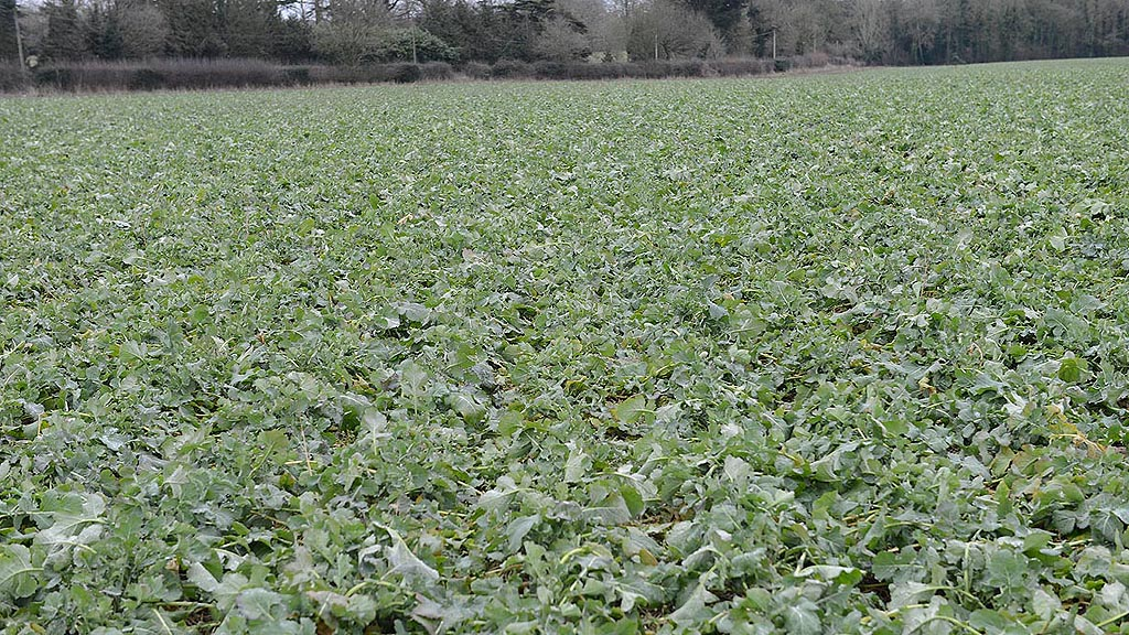 Precision drilled OSR - Feb 2017