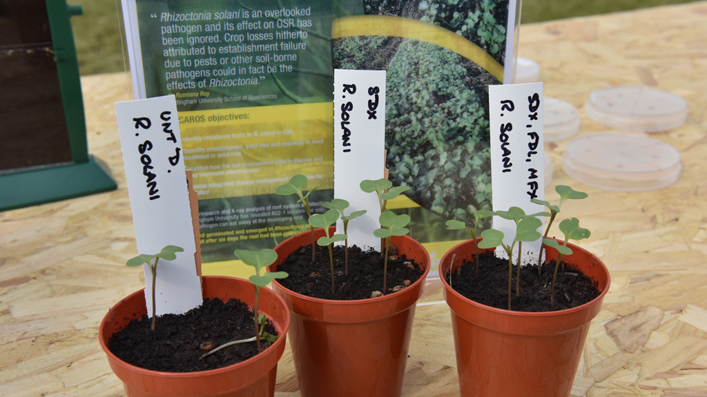 OSR seed treatment pot trials