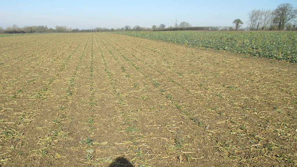 Chris Eglington OSR grazed pictured on 17 Feb