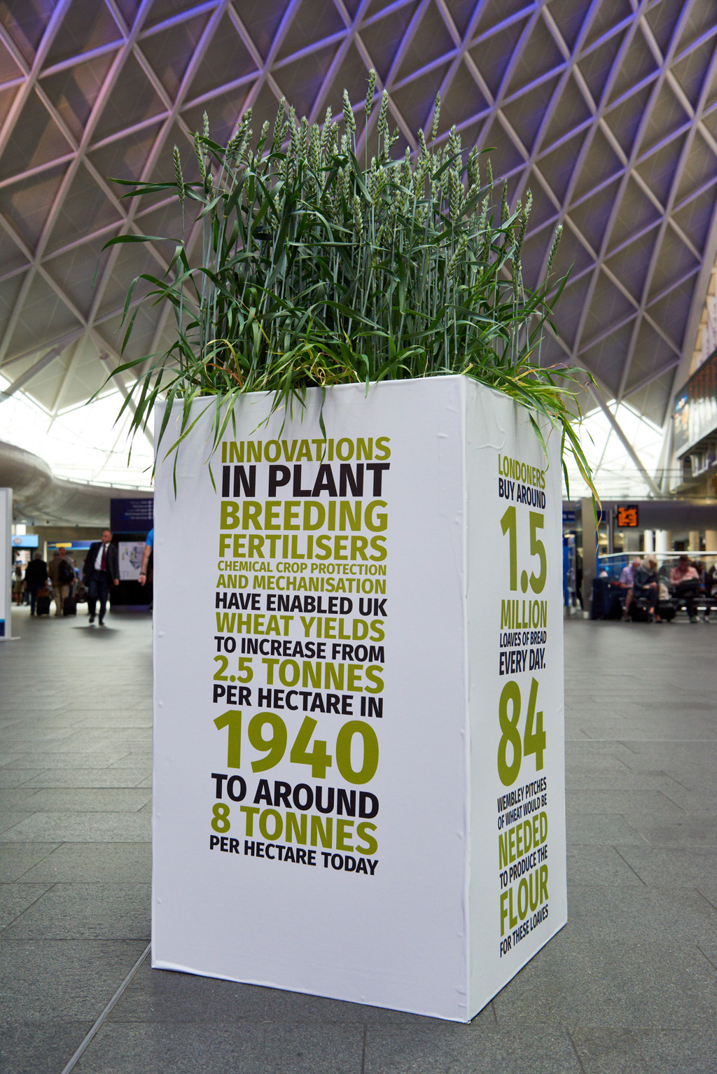 Wheat display at London Kings Cross food production event