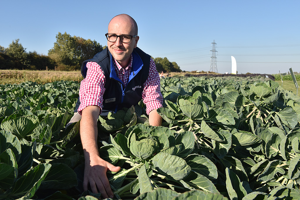 Max Newbert in brassica crop