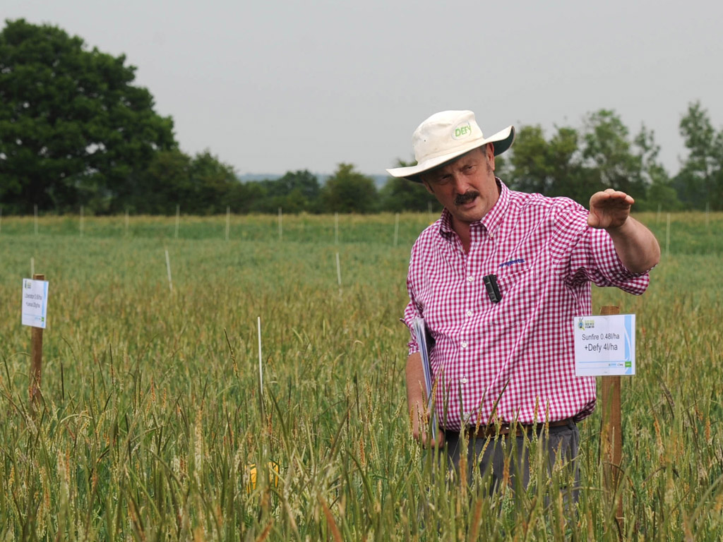 Black-grass Focus Week Iain Hamilton