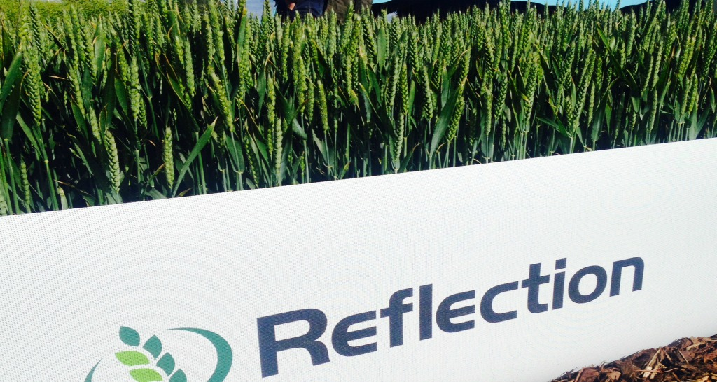 REFLECTION Winter Wheat Crop taken at Cereals Event 2015