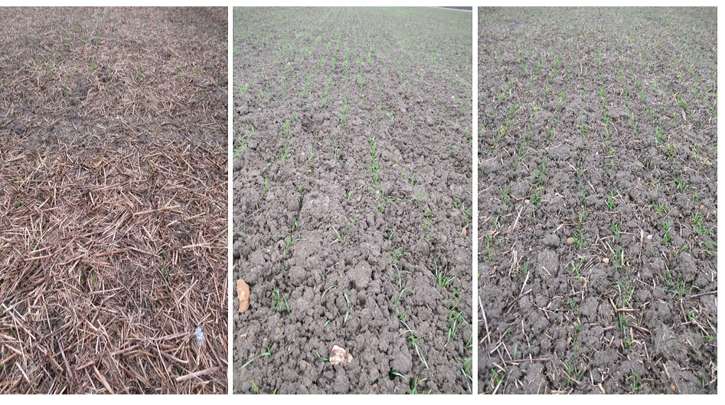 A comparison of the cultivation area using direct drill (l), plough (m) and min-till (r).