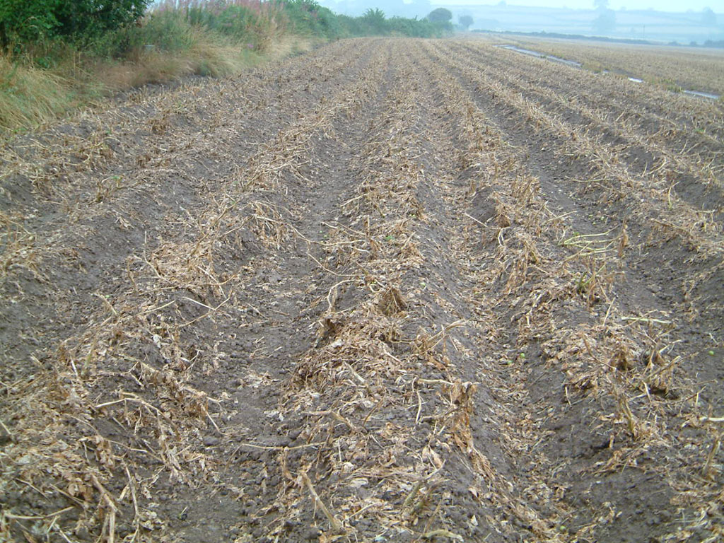 Potato crop desiccation by Reglone followed by flail