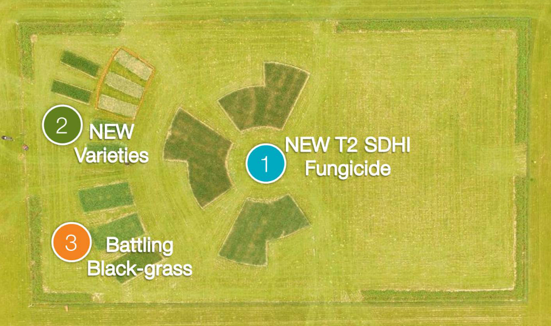 Cereals Event site map
