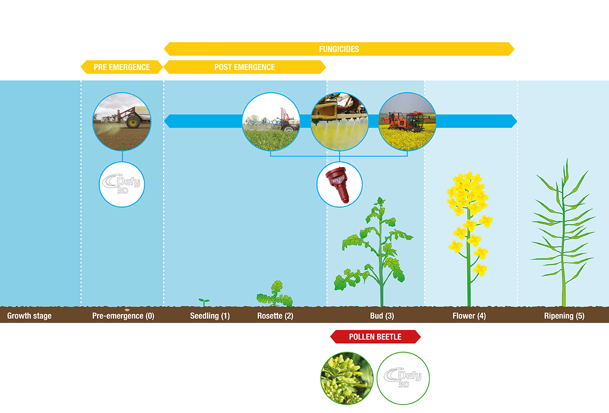 OSR application timeline