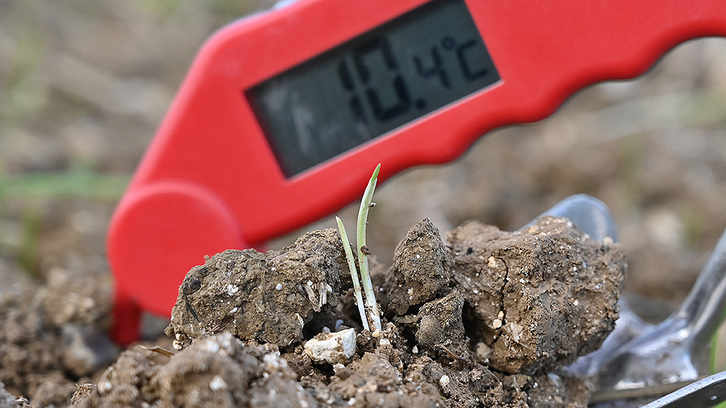Wheat at peri-emergence + soil temperature