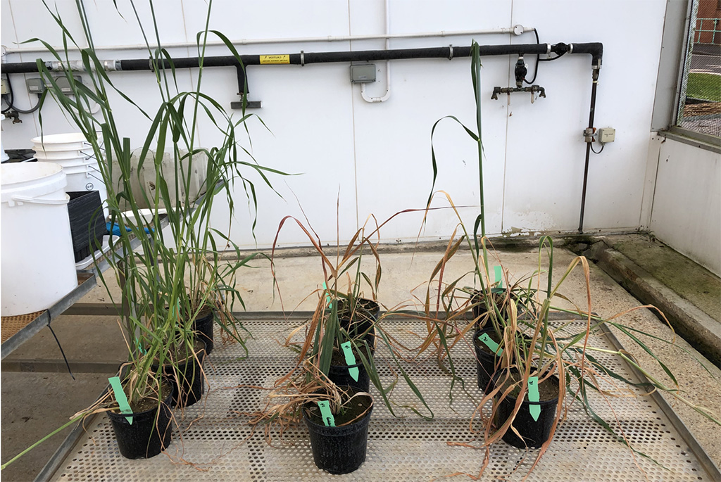 Axial Pro pot trials show better uptake and efficacy with shaded leaves
