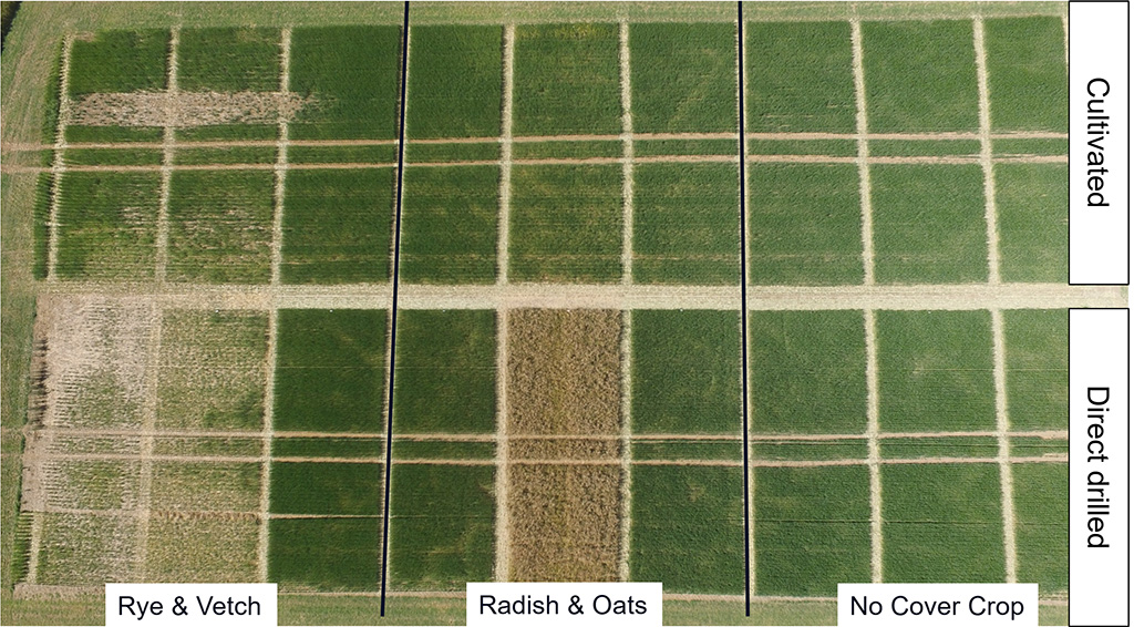 Trials results showing potential issues of cover crops for spring barley establishment with destruction timing and drilling techniques