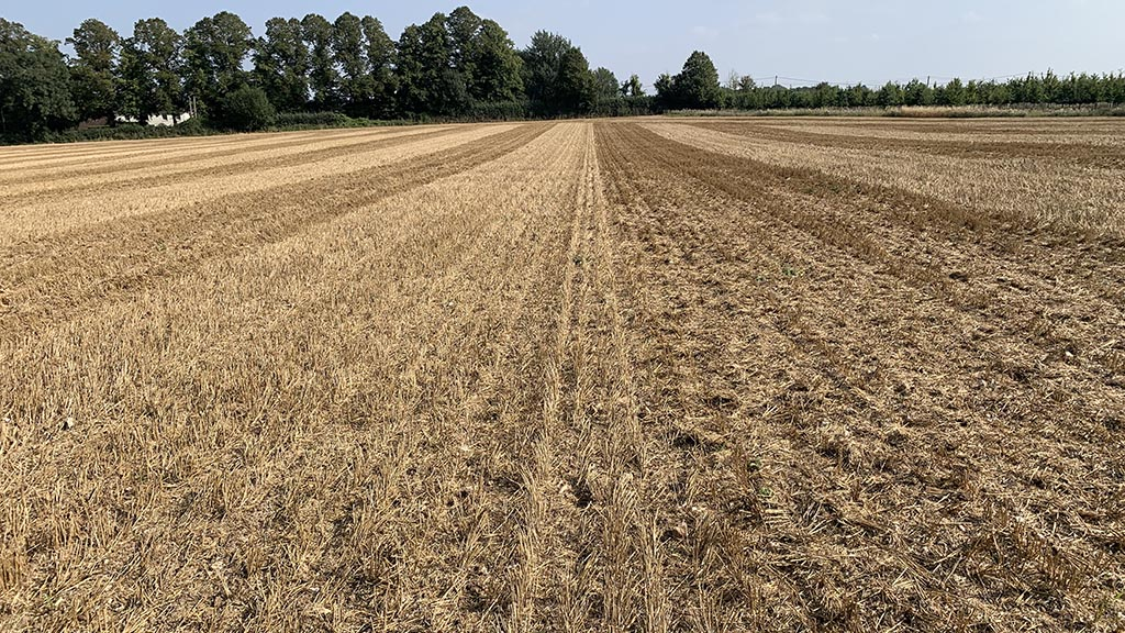 Light till on stubble to encourage grass weeds