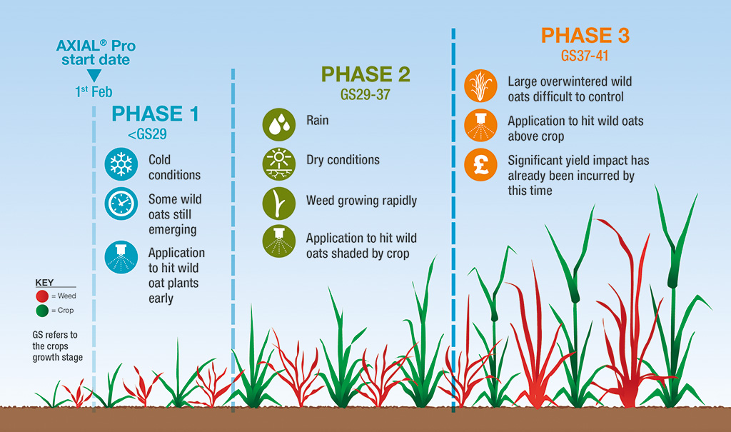 Wild oat control challenges in spring