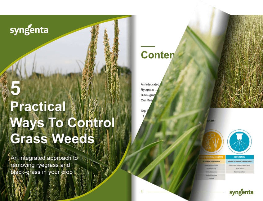 Free expert guide from Syngenta on grass weed control. Top tactics to reduce black-grass and ryegrass in your cereal crop.