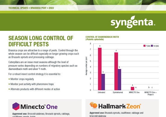 Brassica Pest Technical Update 2021