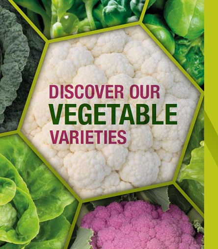 Syngenta Vegetable Seeds
