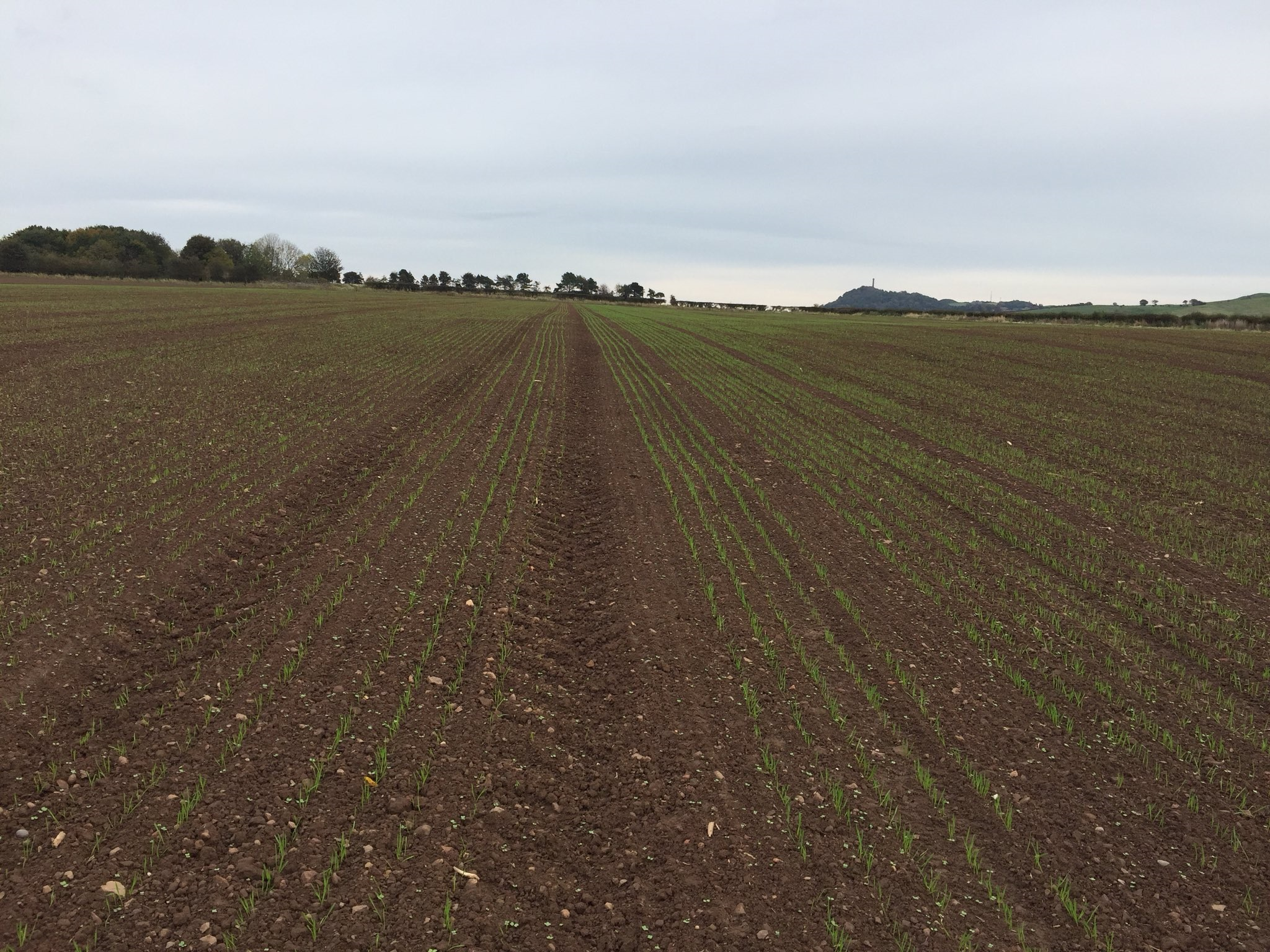 Vibrance Duo Split Field - East Lothian