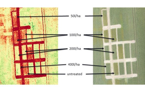 NDVI imagery of Barton Black-grass application trials
