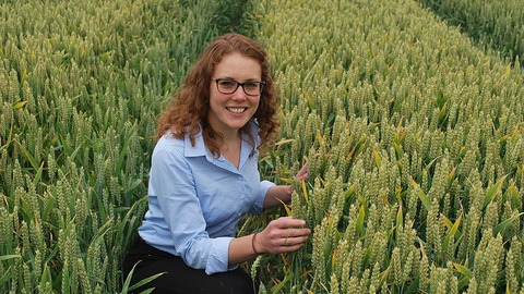 Georgina Wood at Barton Black grass Focus Site