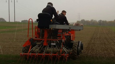 Drilling at rye-grass site