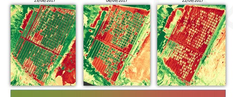 Eurofins 2017 aerial imagery of blight infection