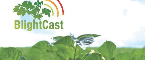 BlightCast logo with leaf