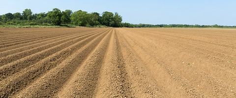 Weed free seedbed for clean and fast potato emergence
