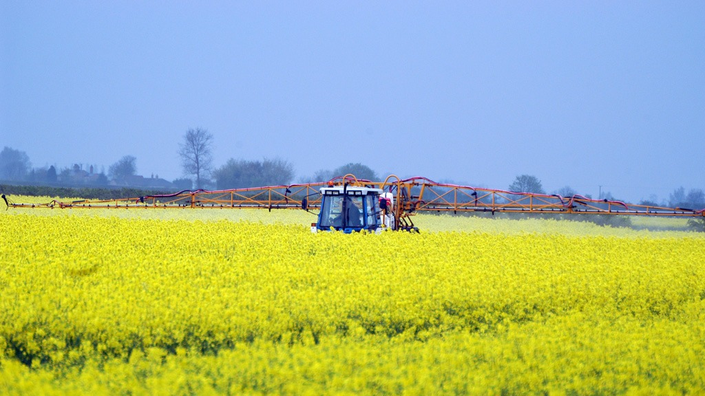 Amistar application in flowering OSR