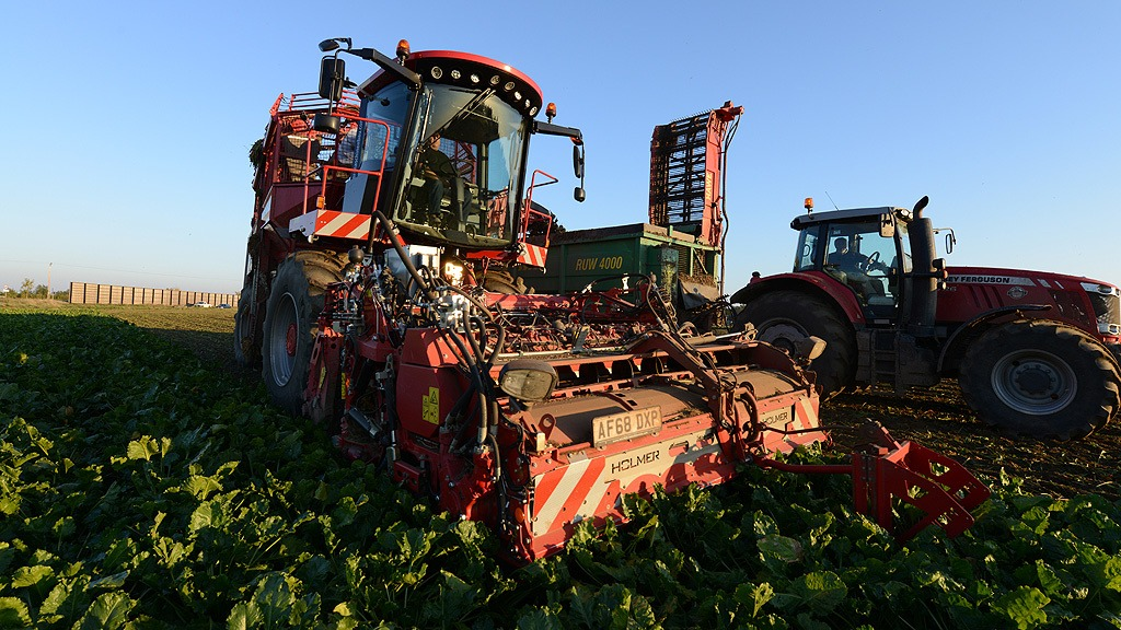 Beet harvesting - Richard Ivatt