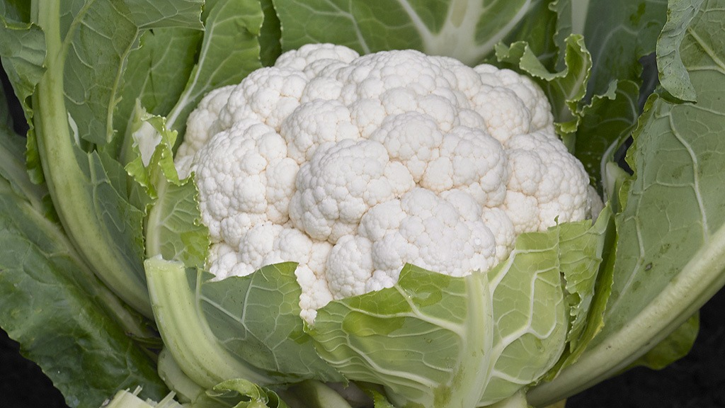 Andromeda cauliflower