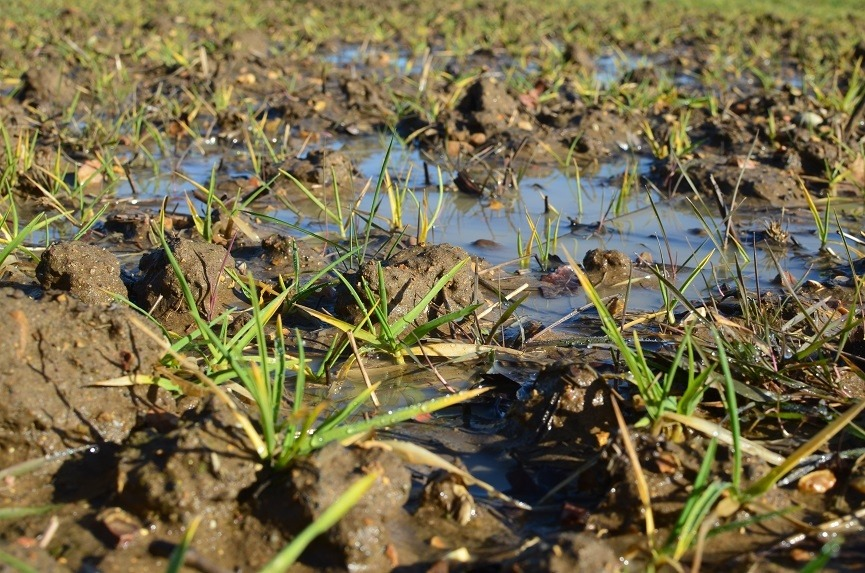 Picture of waterlogged field in Barton