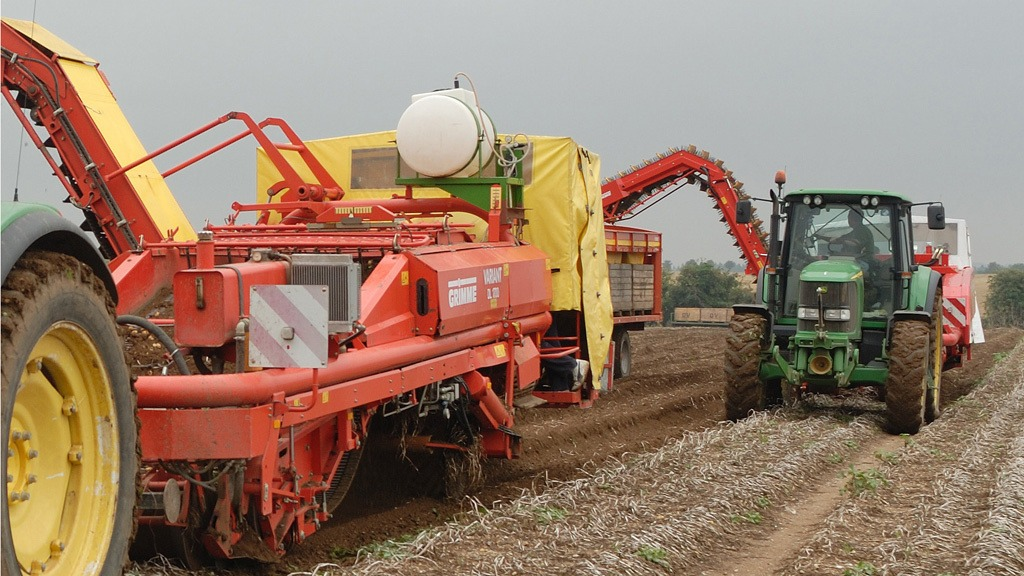 Potato harvesting Reglone desiccated crop