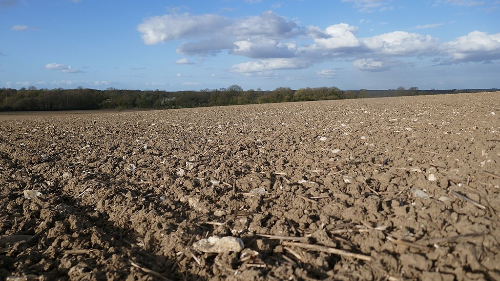Seedbed cultivations