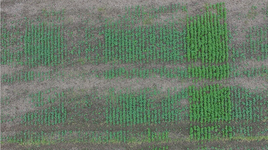 iOSR Focus site drone pic of establishment trials