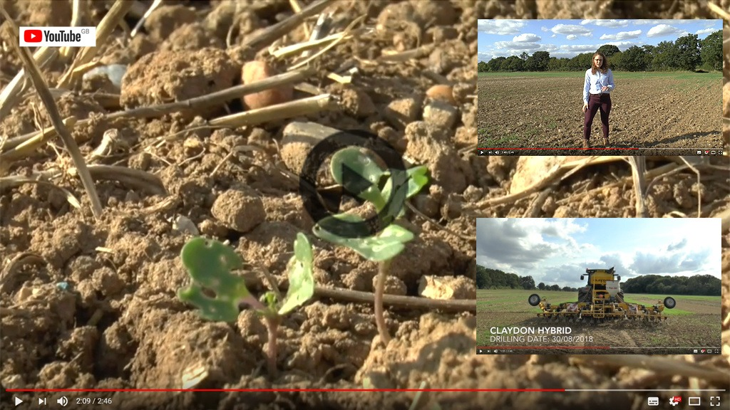 Georgie Woods' first video report from the new Syngenta iOSR Focus Site