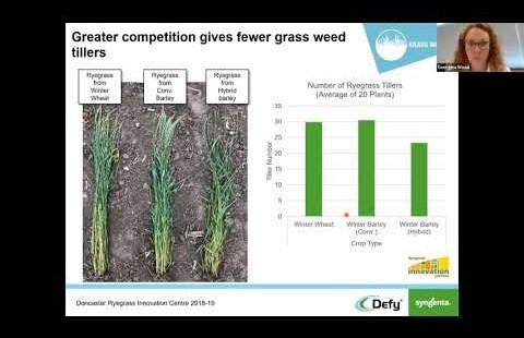 Grass weeds Ryegrass at Doncaster Virtual Meeting Recording