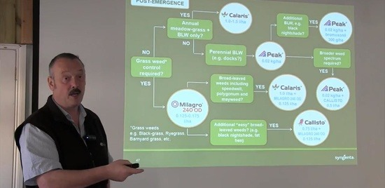 Iain Hamilton maize herbicide decision tree