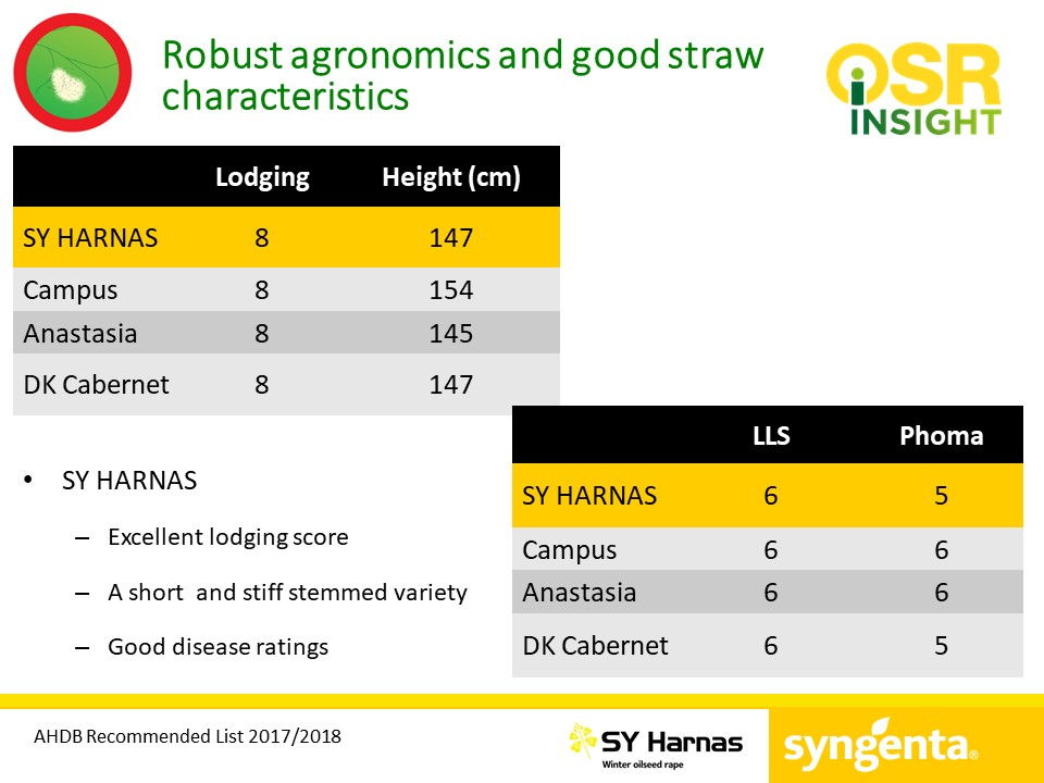 SY Harnas robust agronomics